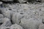 Burren_landscape