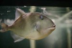 Funny_fish